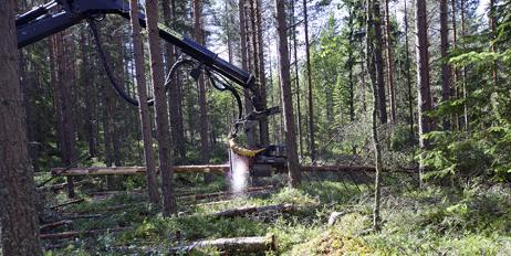 Samarbeidsprosjektet skal skape vekst og innovasjon i bruk av skogressurser på begge sider av grensen.