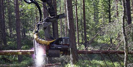 Samarbeidsprosjektet skal bidra til vekst og innovasjon på begge sider av grensen basert på råvarer fra skogen.